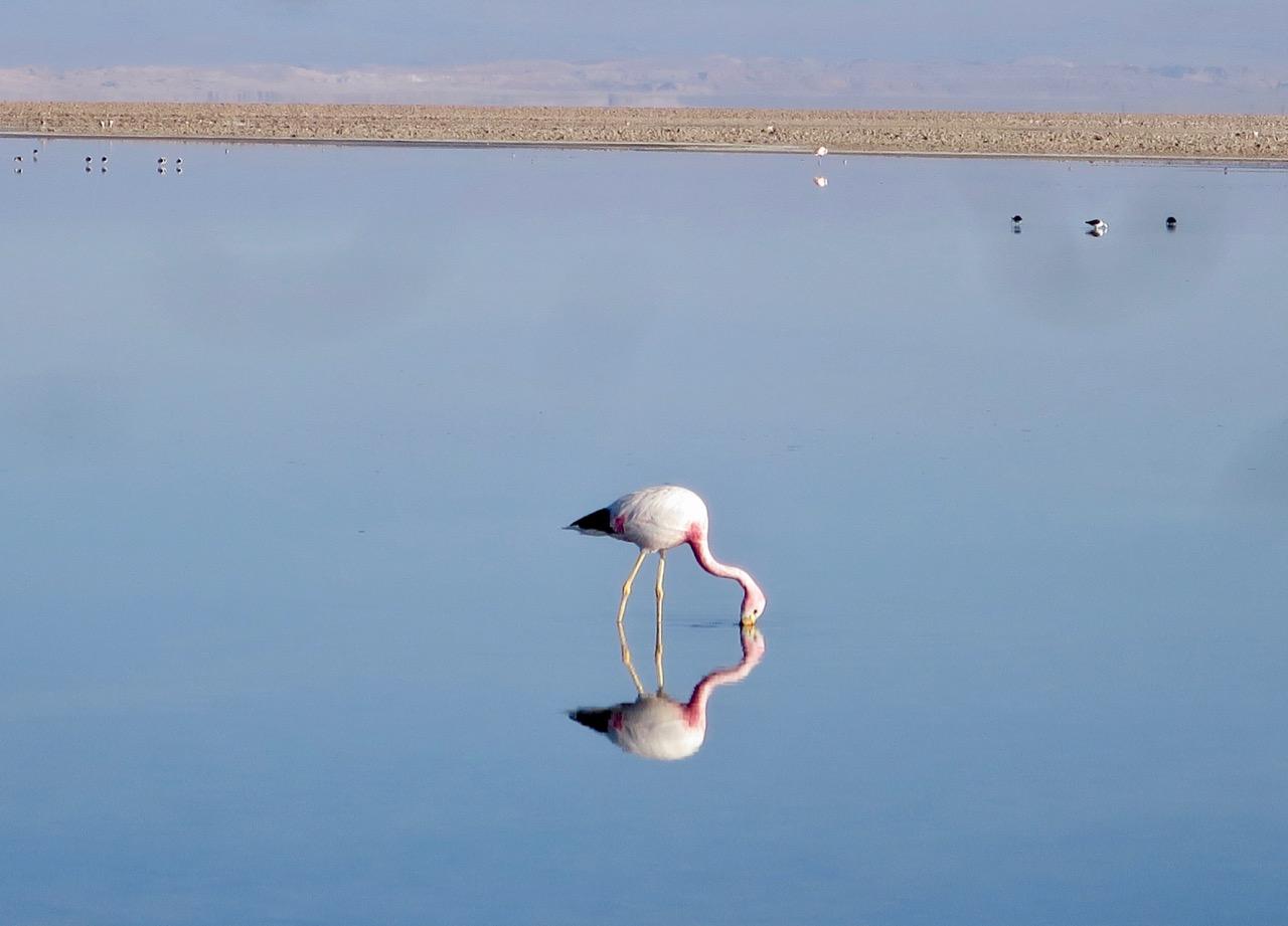 Atacama 3 07