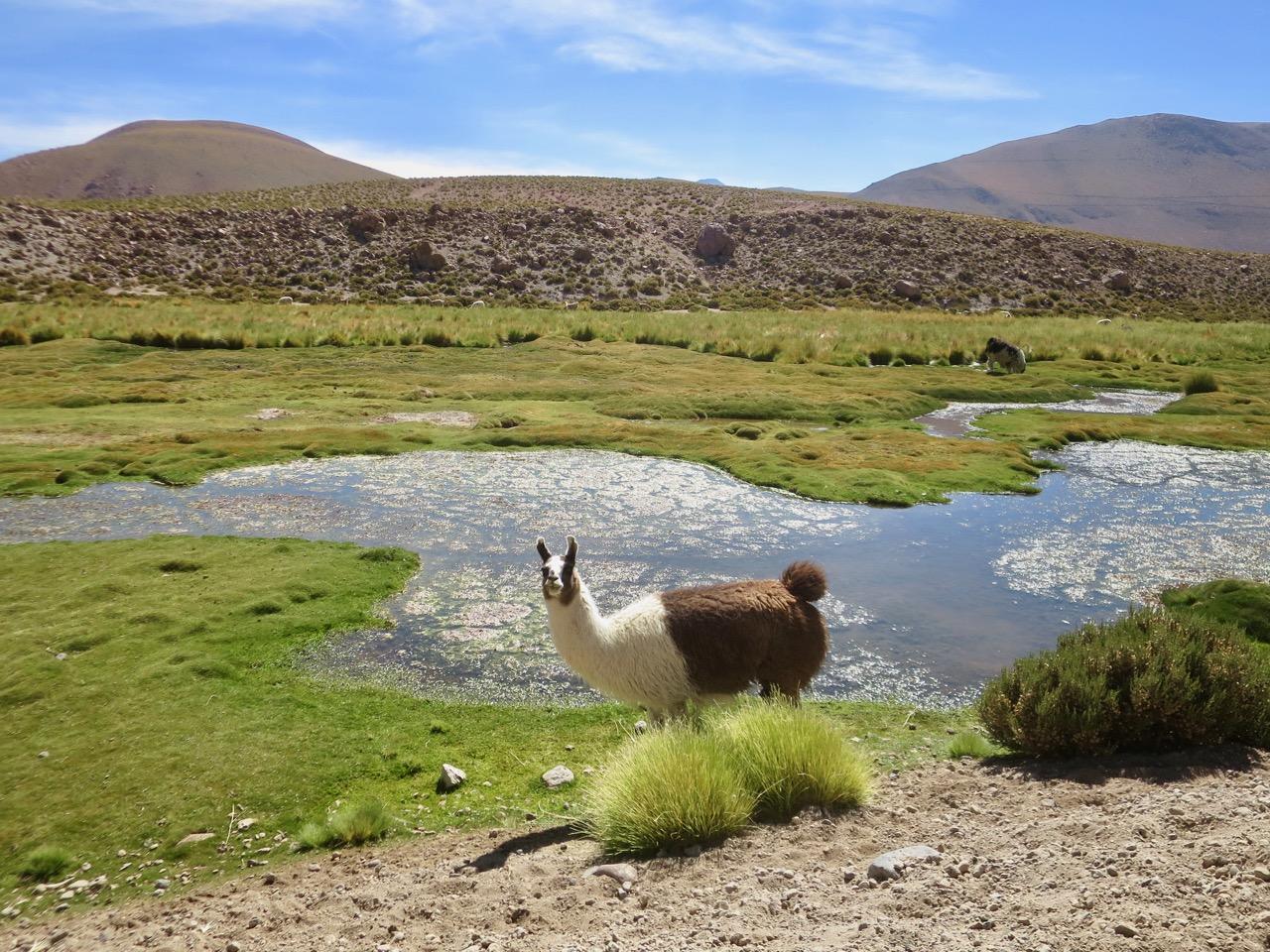Atacama 4 10