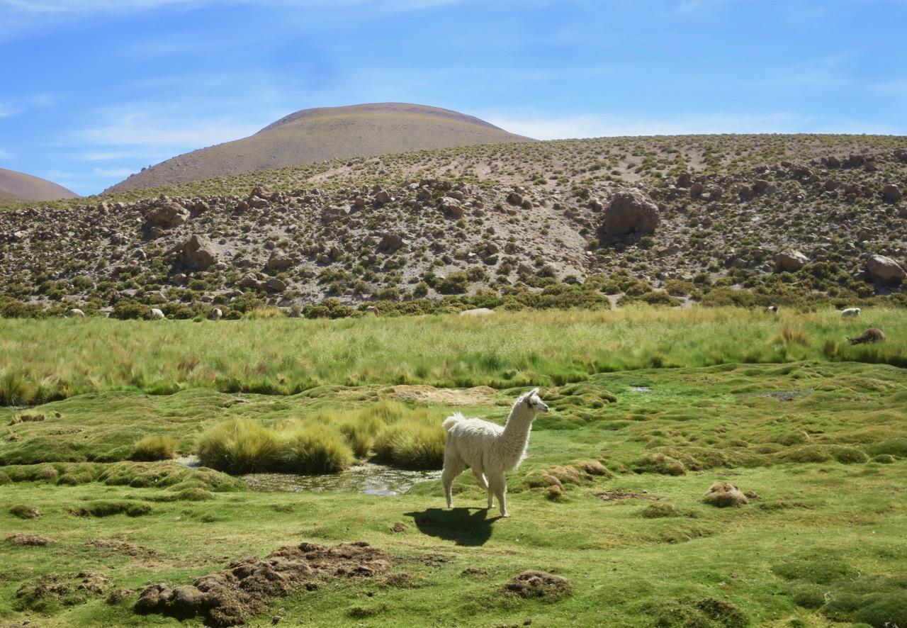 Atacama 4 14