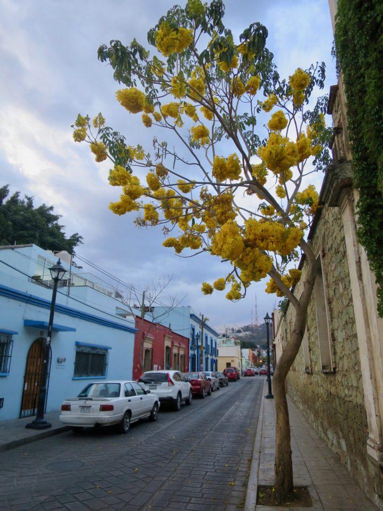 Oaxaca 1 02