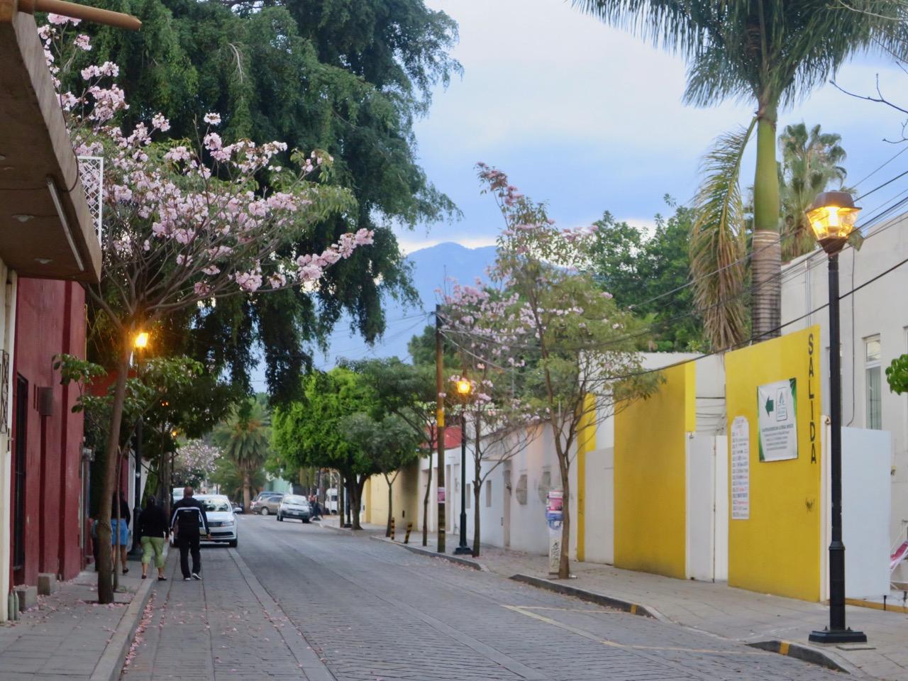 Oaxaca 1 03