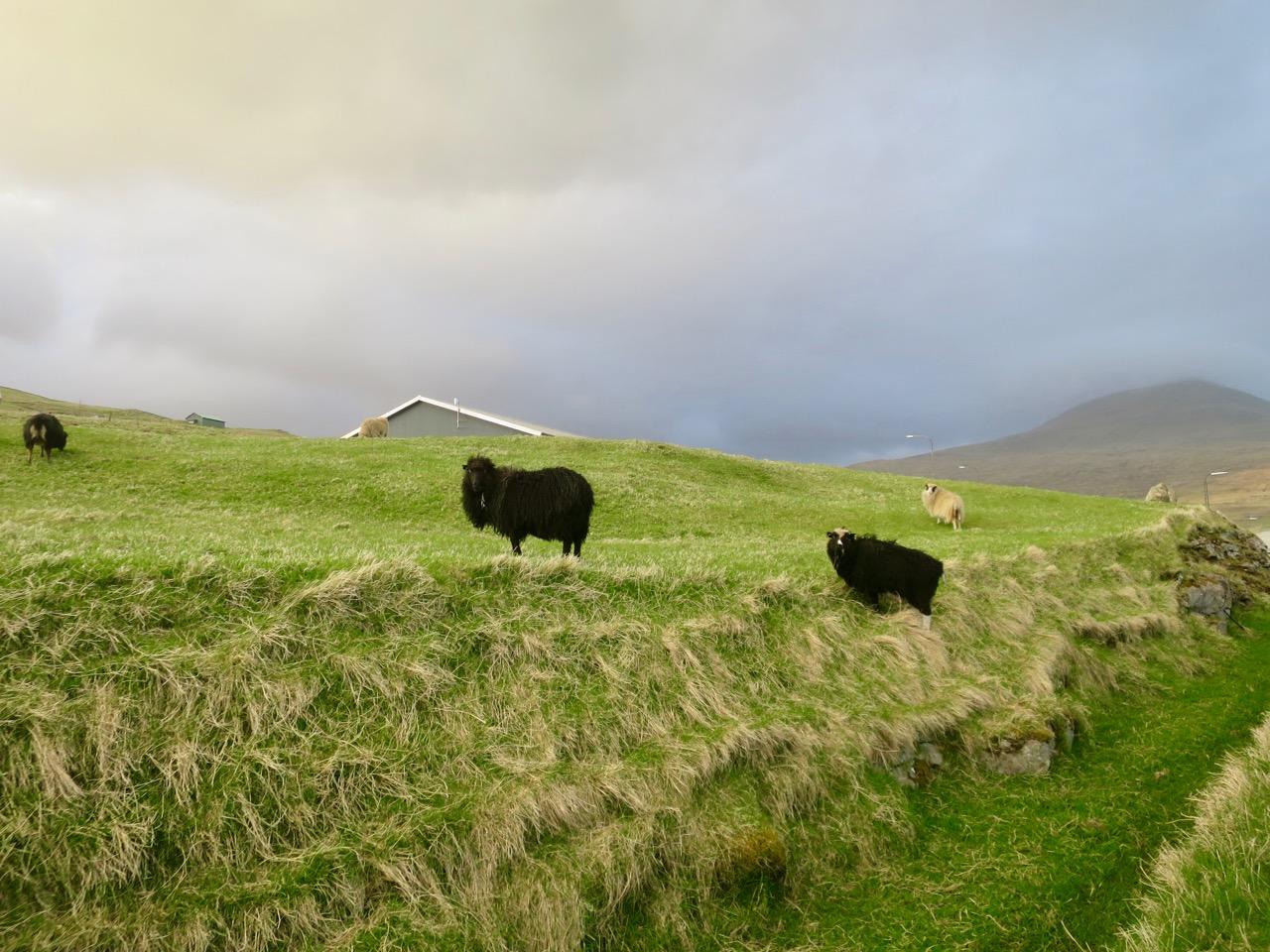 Ilhas Faroe 1 05