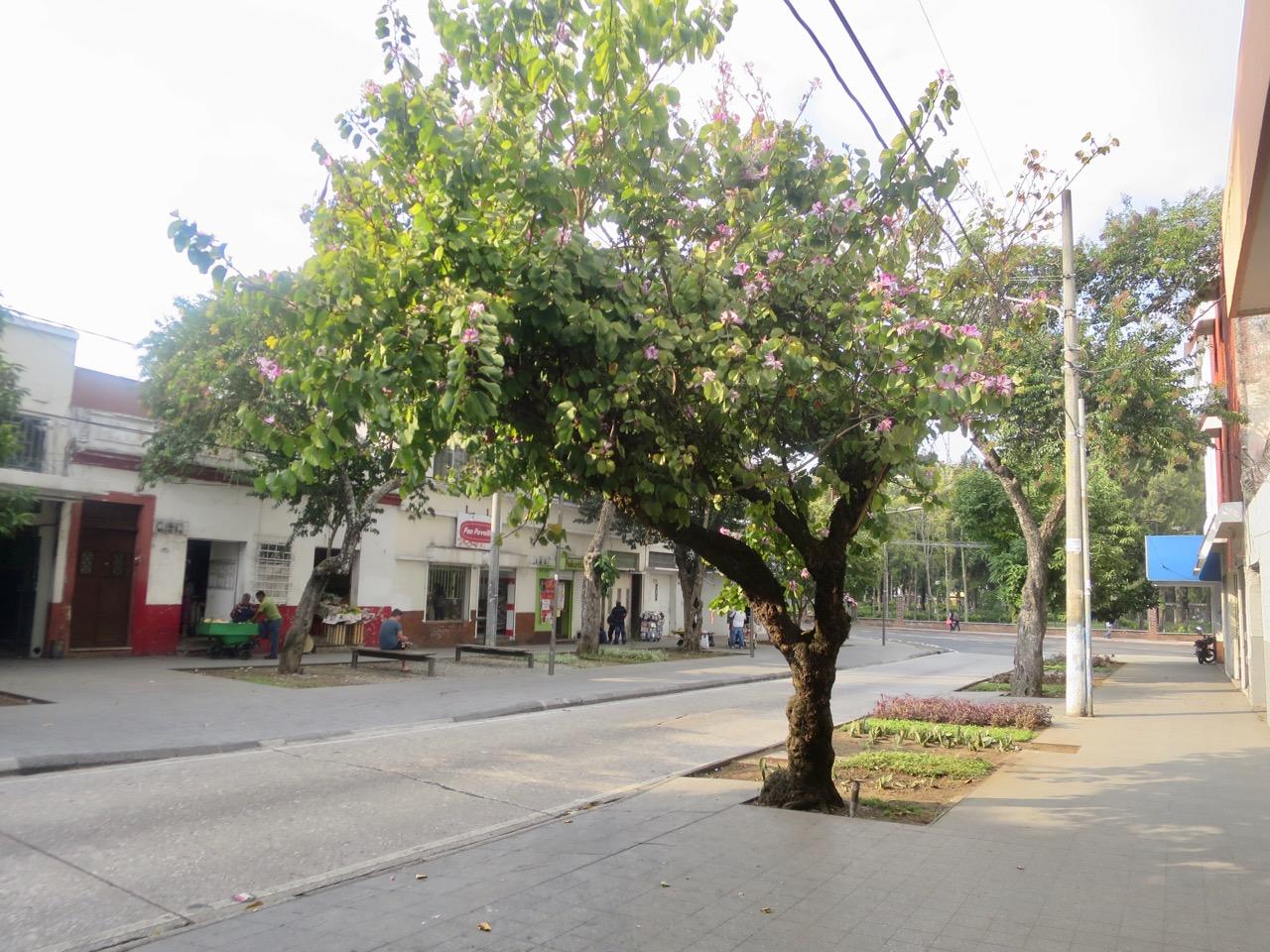 Guatemala 1 08