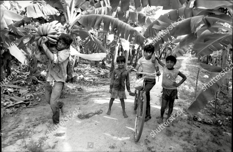 Bananas em Honduras 1990