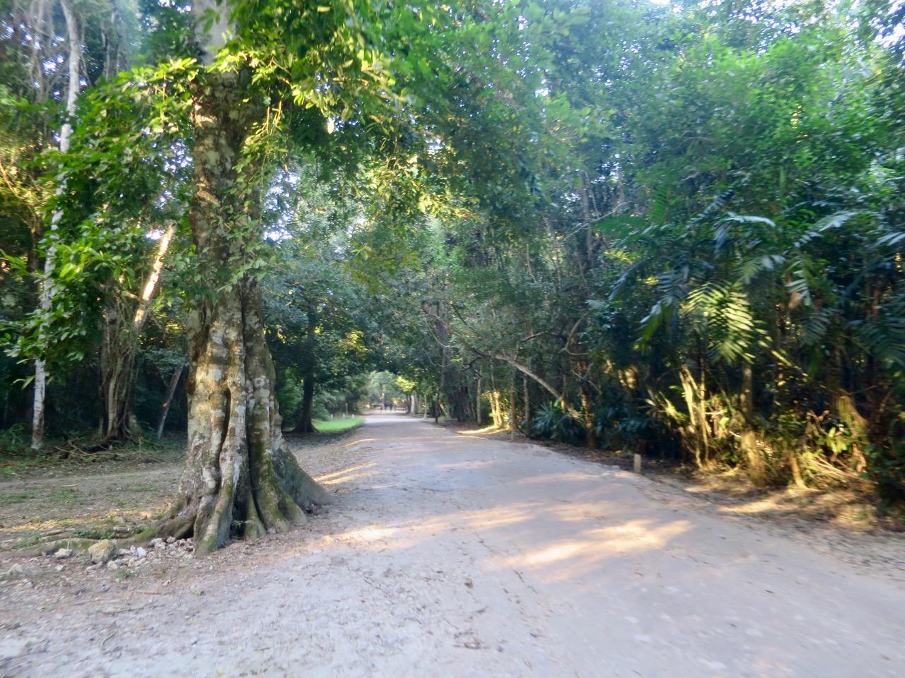 Tikal 1 09