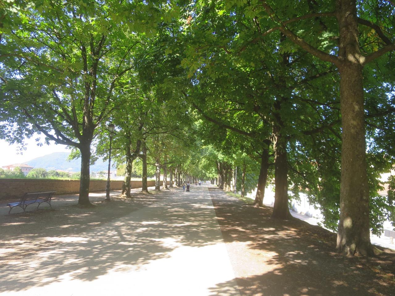 Lucca 1 35