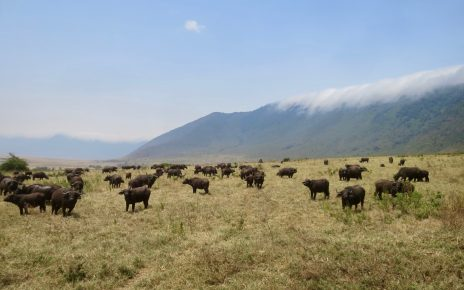 Ngorongoro 1 01