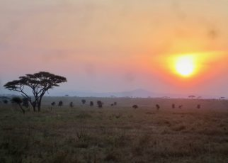 Serengeti 1 01