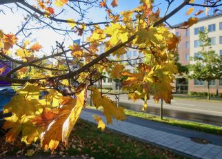 Outono Estocolmo 1 01
