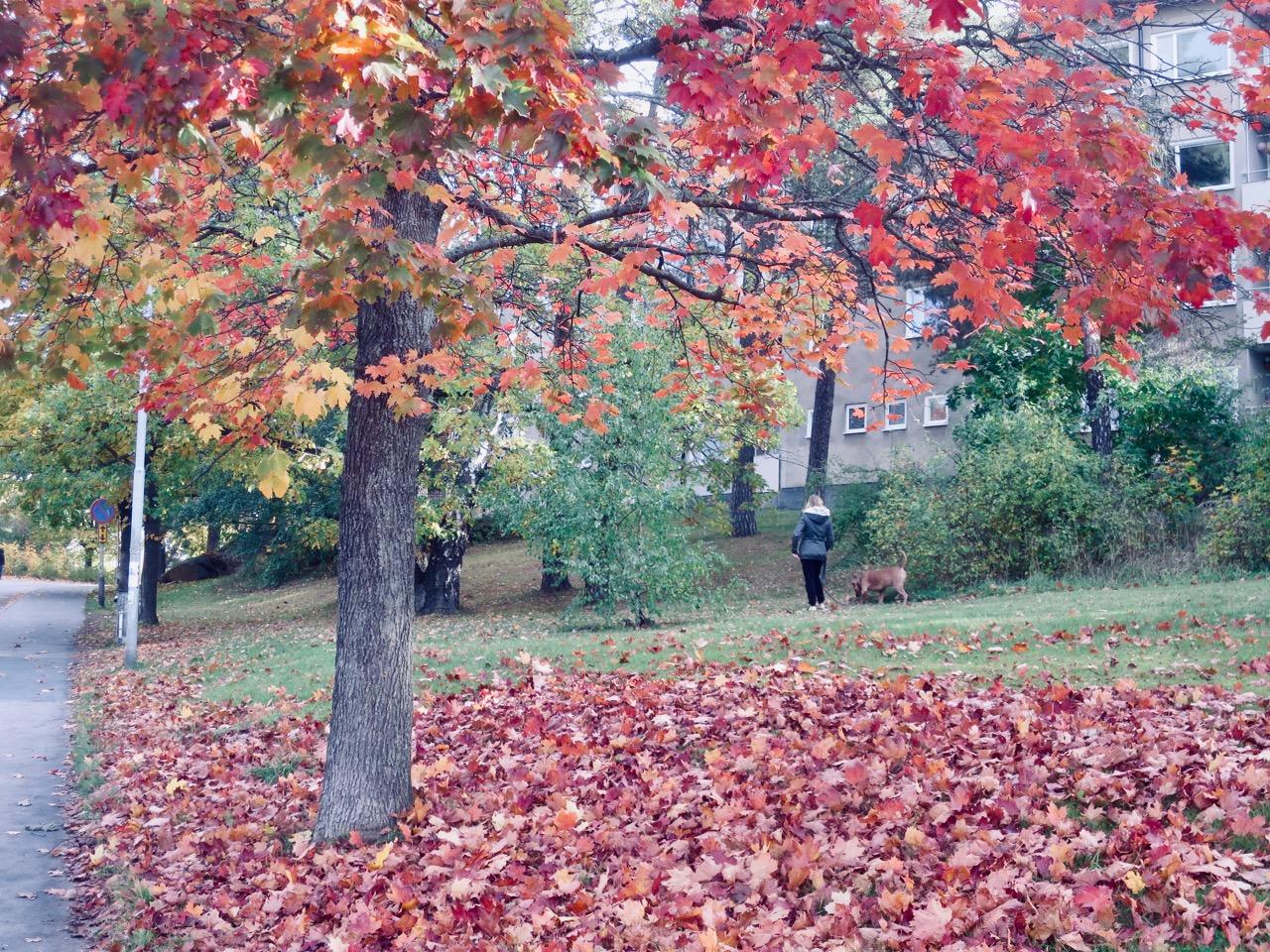 Outono Estocolmo 1 10
