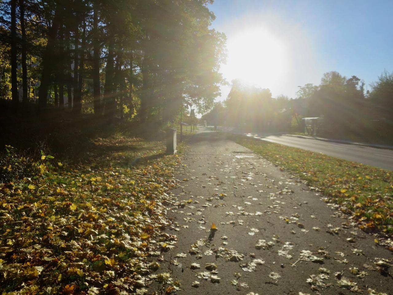 Outono Estocolmo 1 12