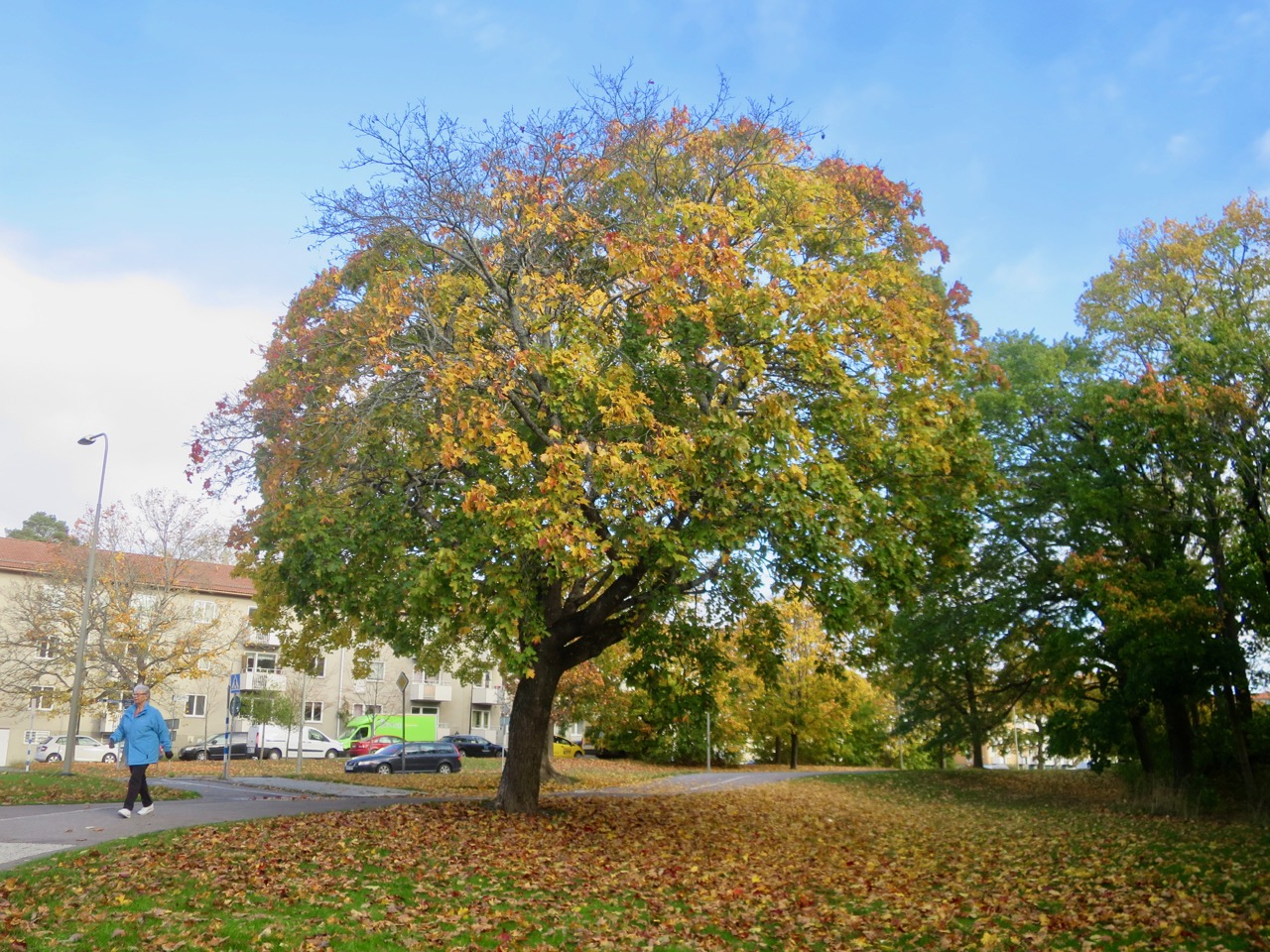 Outono Estocolmo 1 17
