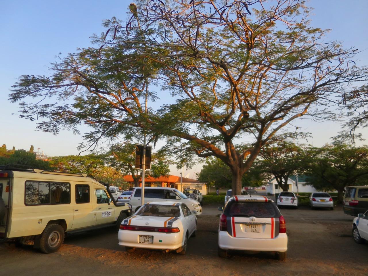 Tanzania chegada 1 09