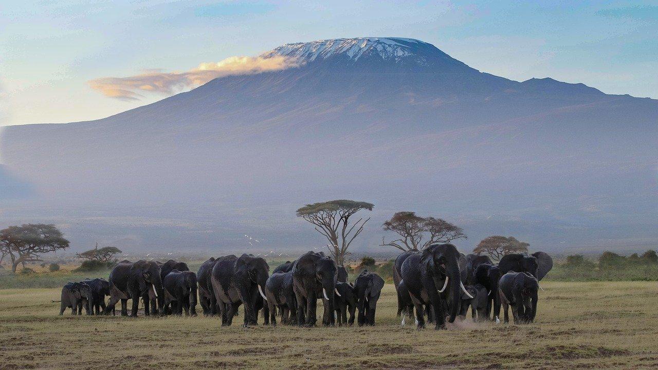 Kilimanjaro extra 02