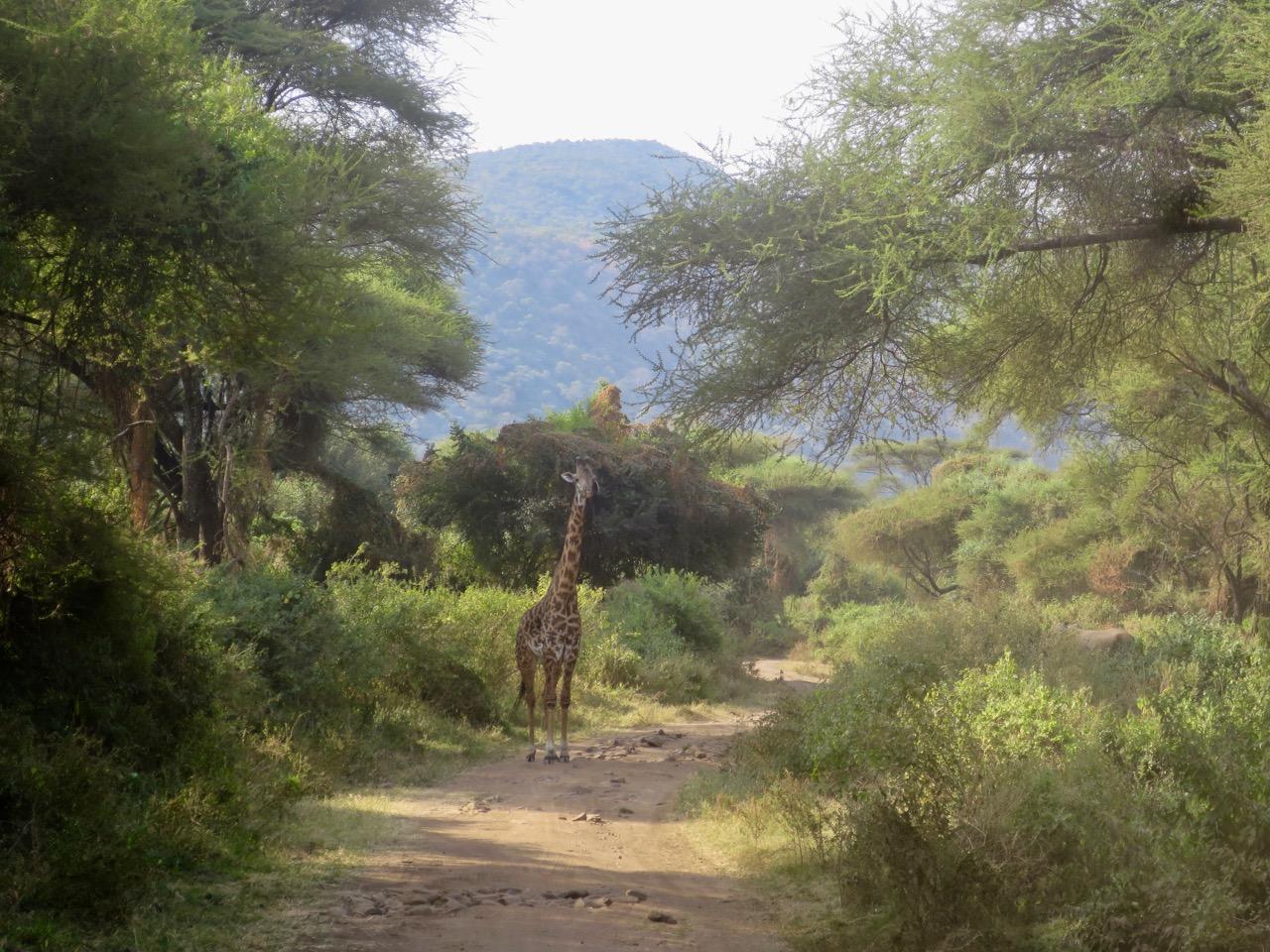 Lake Manyara 1 01
