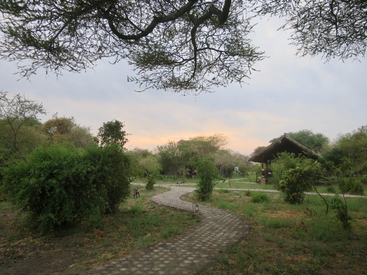 Lake Manyara 1 04