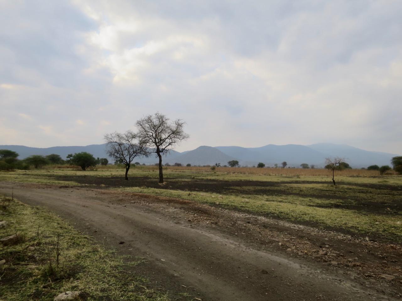 Lake Manyara 1 08
