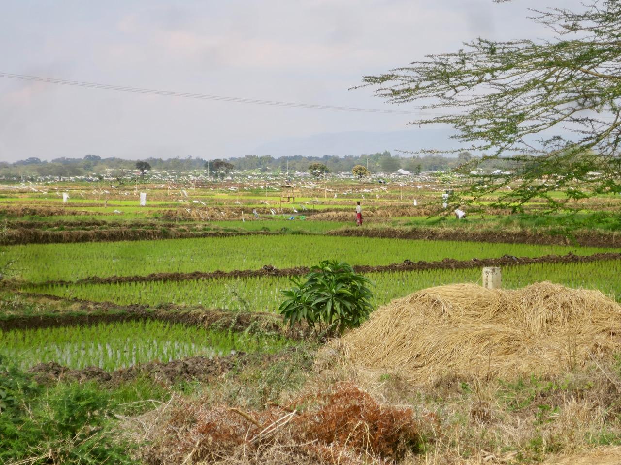 Lake Manyara 1 10
