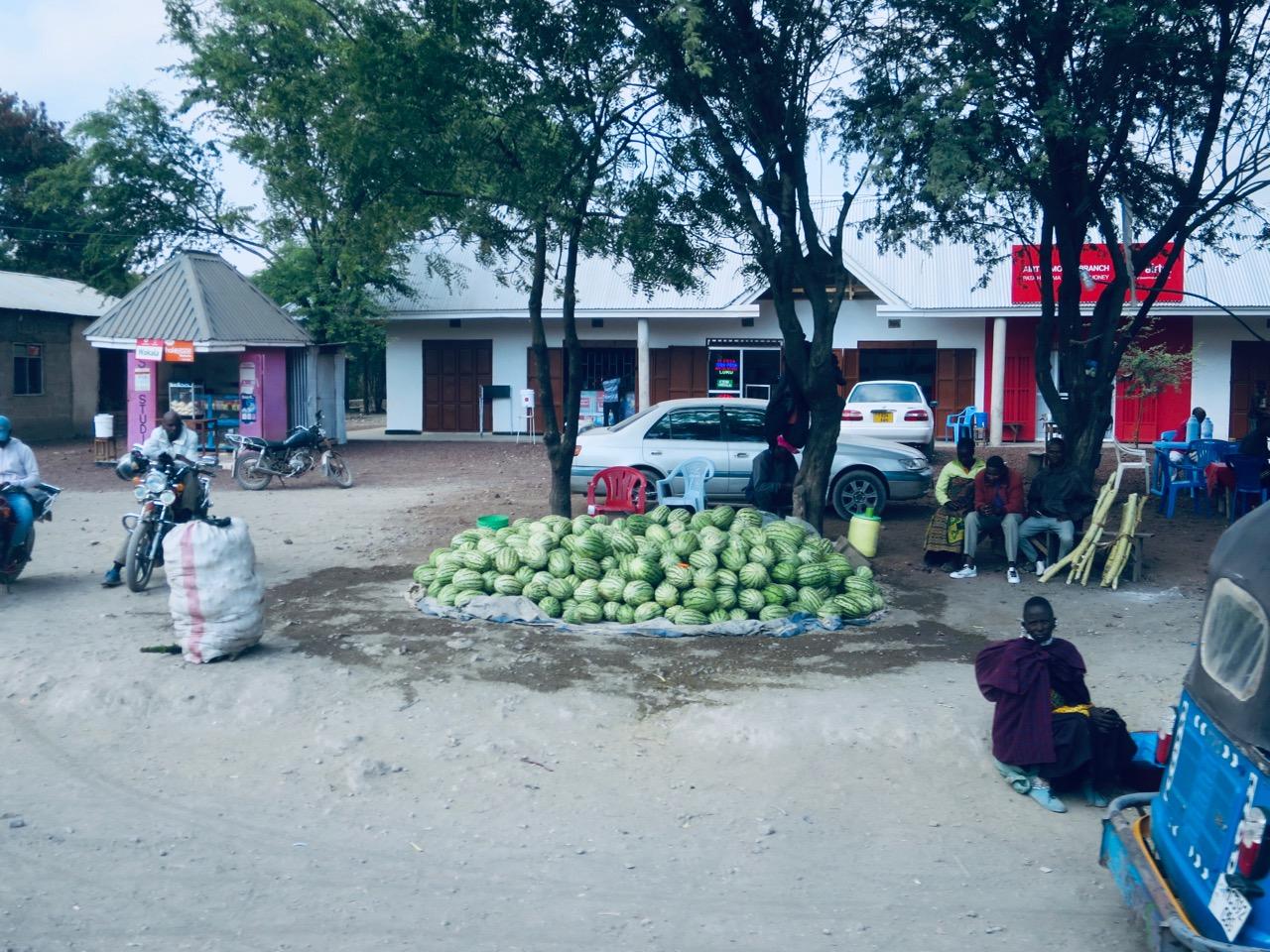 Lake Manyara 1 11