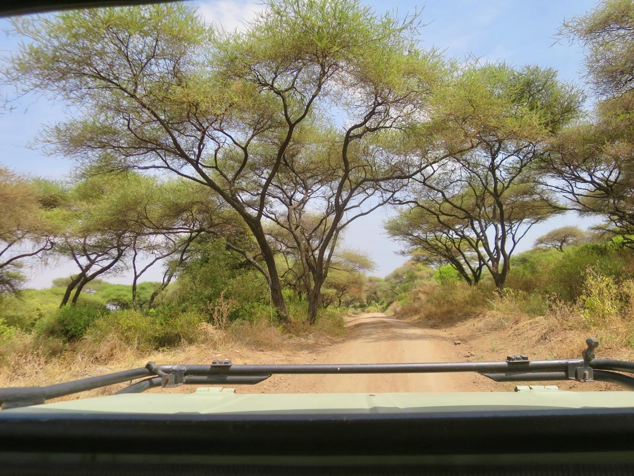 Lake Manyara 1 28