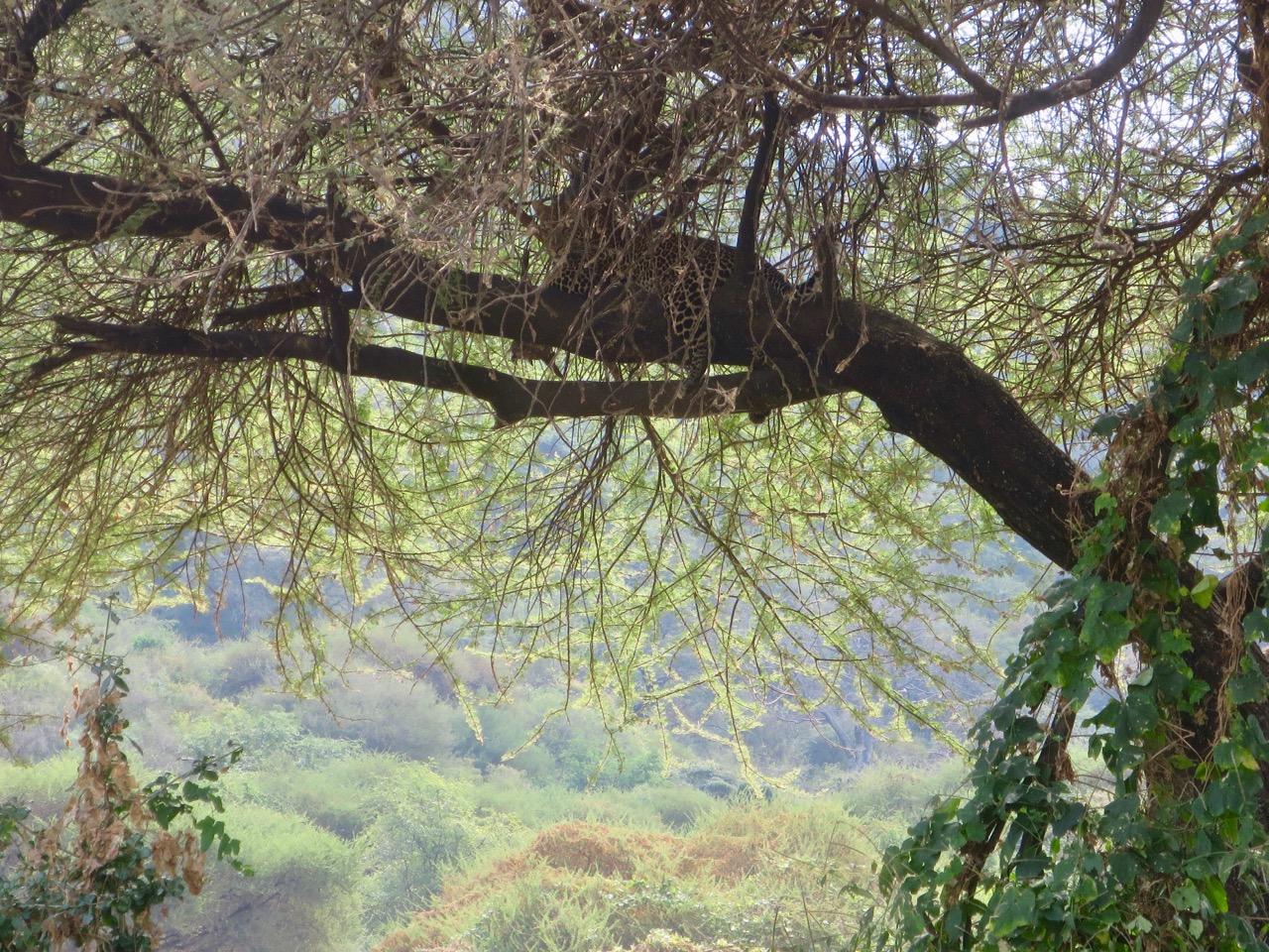 Lake Manyara 1 33