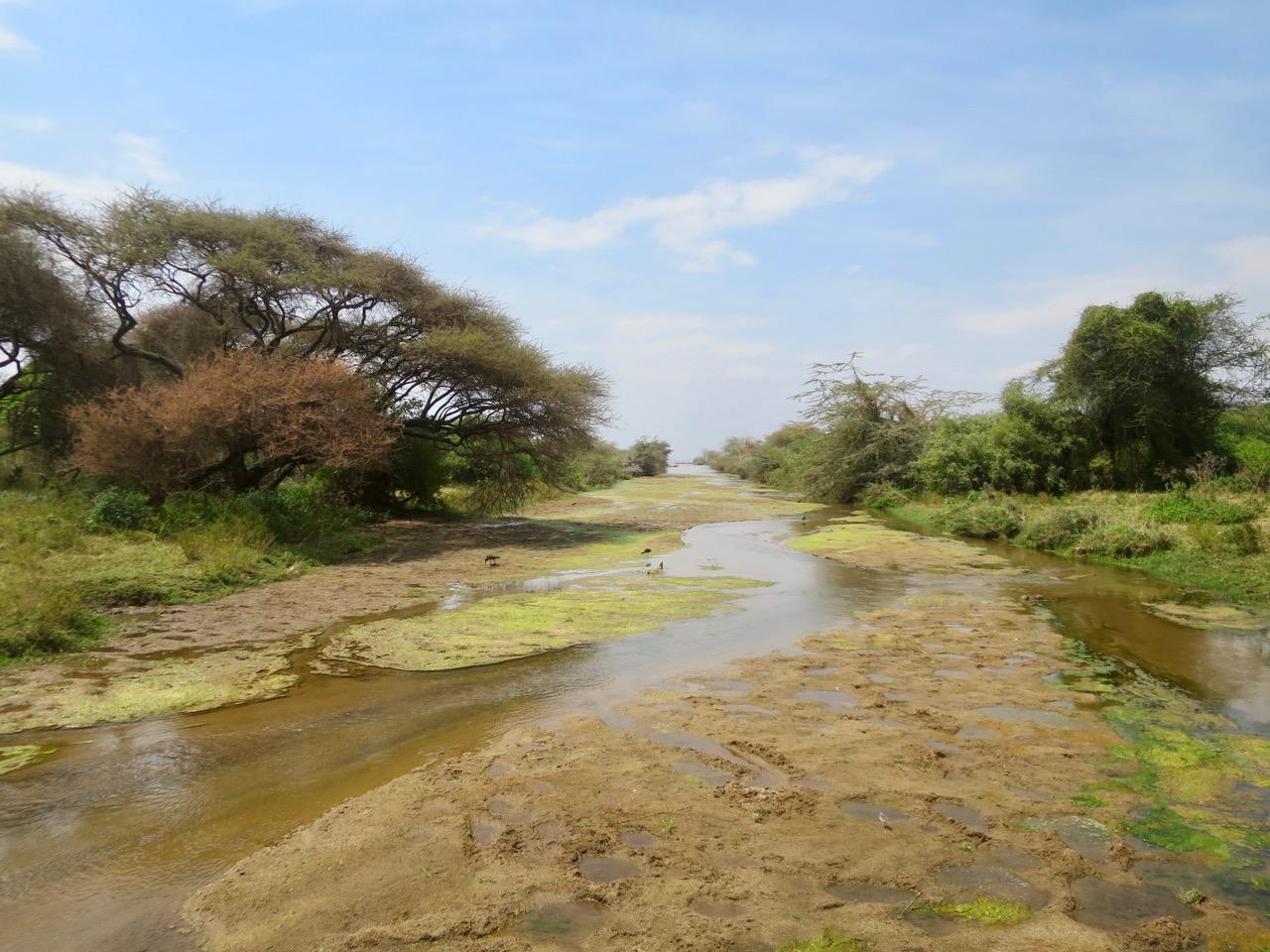 Lake Manyara 1 36