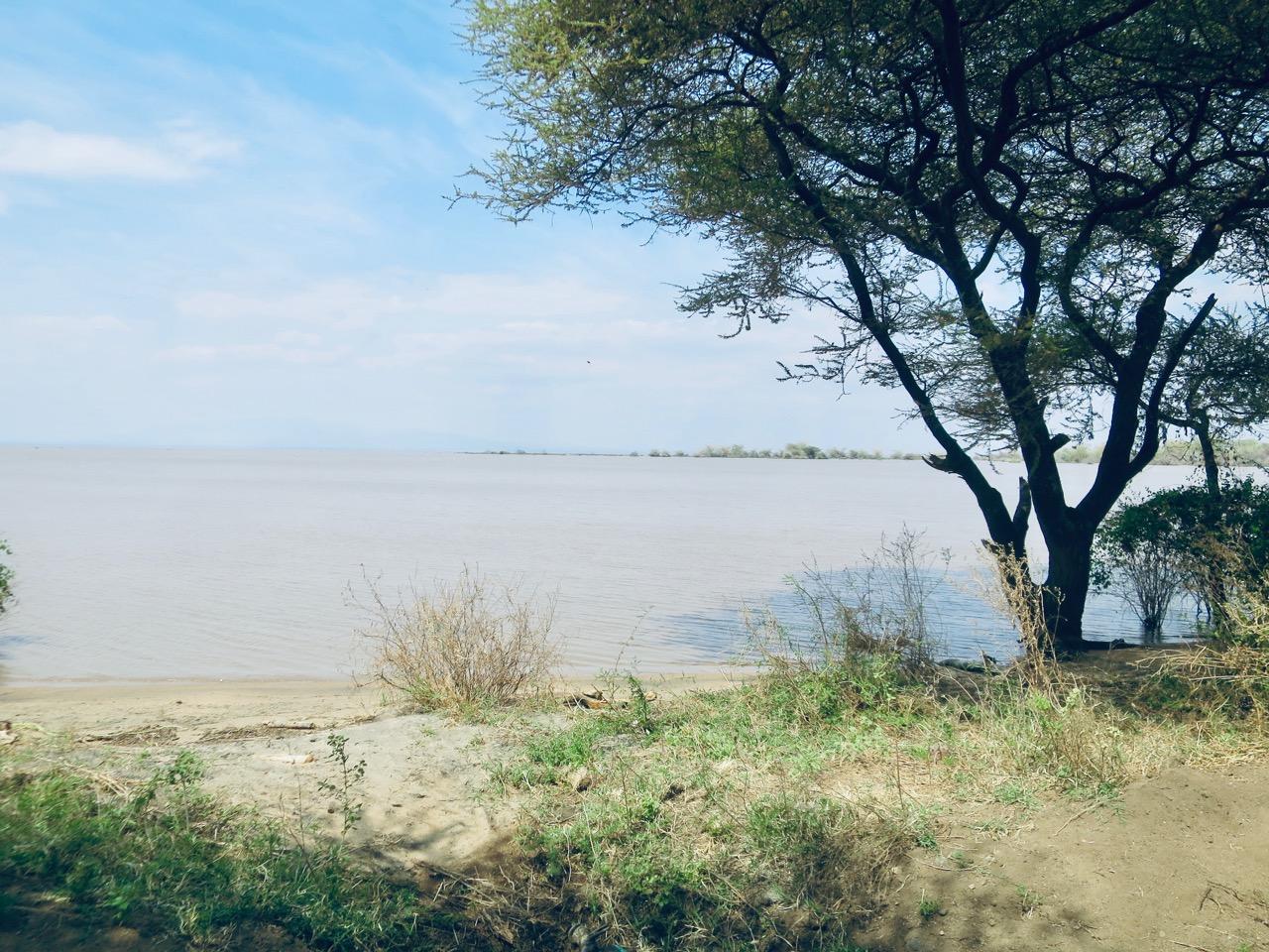 Lake Manyara 1 37