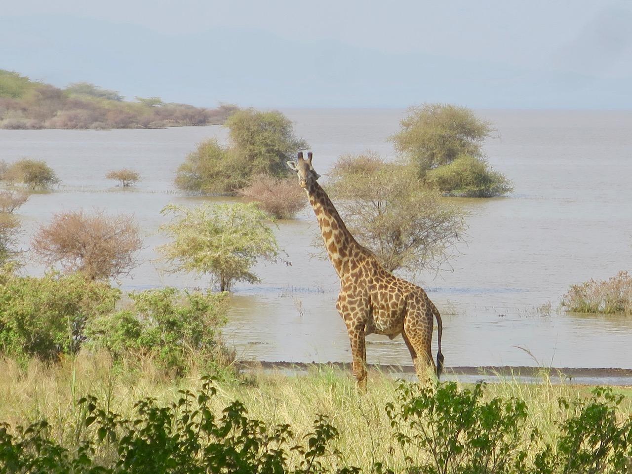 Lake Manyara 1 41