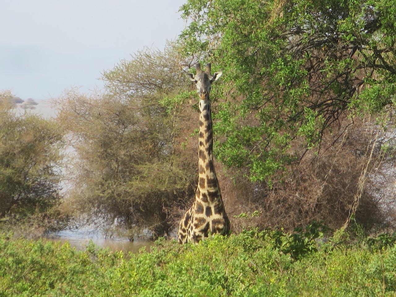 Lake Manyara 1 42