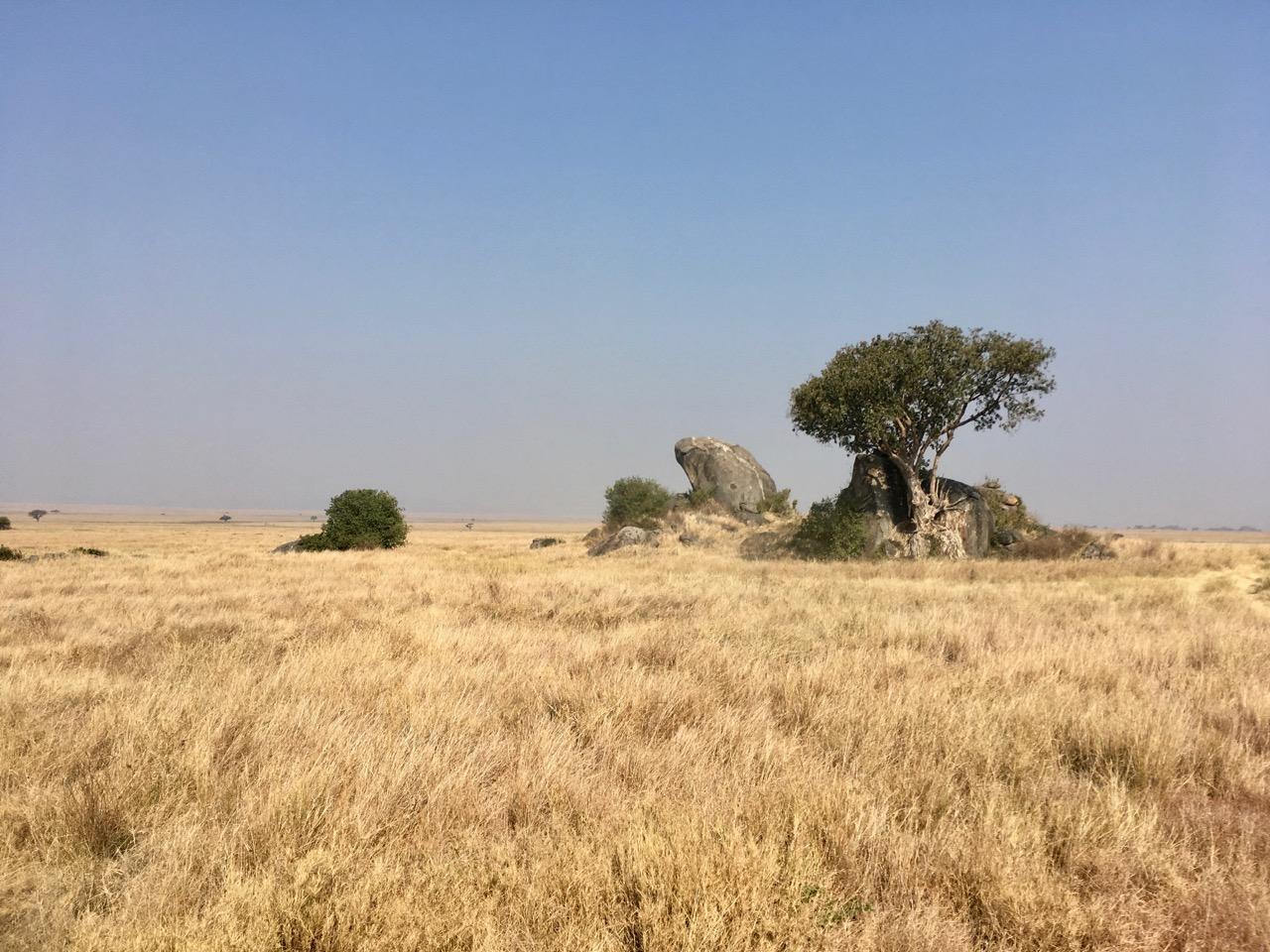 Maasai 1 02