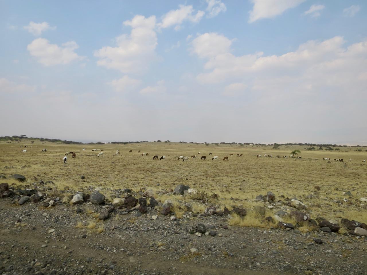 Maasai 1 04