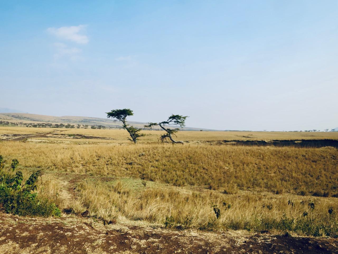 Maasai 1 16