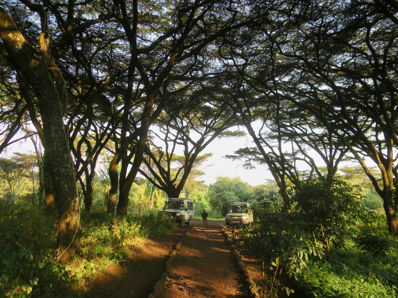Maasai 1 25