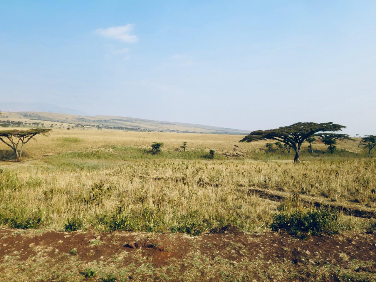 Maasai 1 33