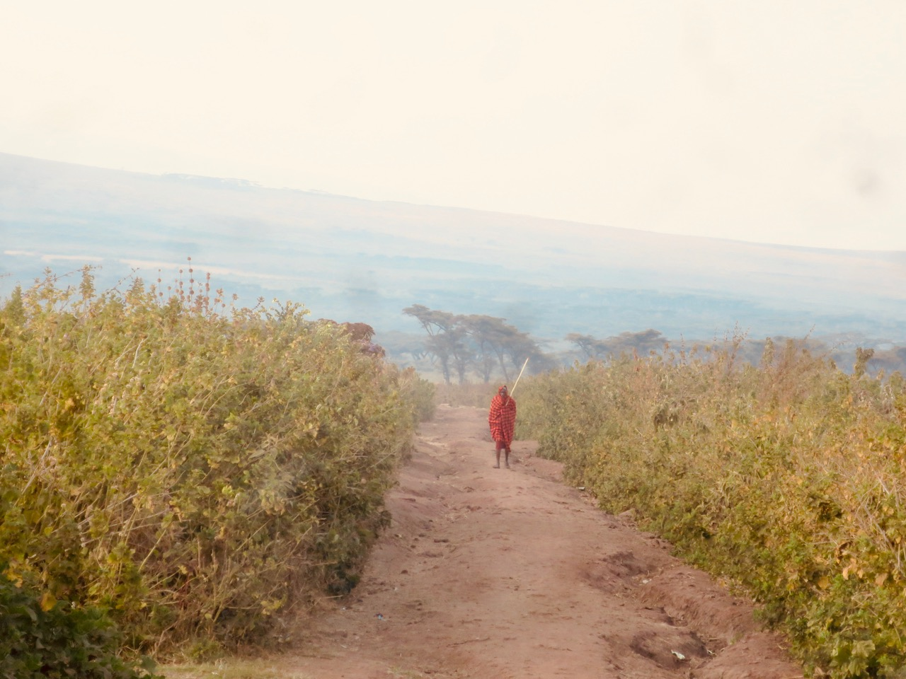 Ngorongoro 1 06