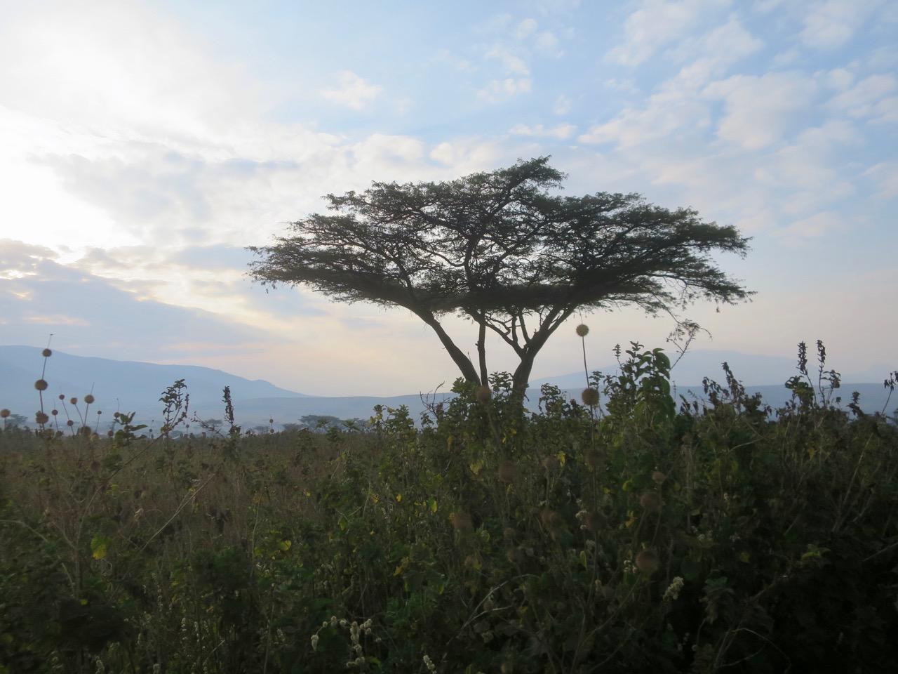 Ngorongoro 1 08