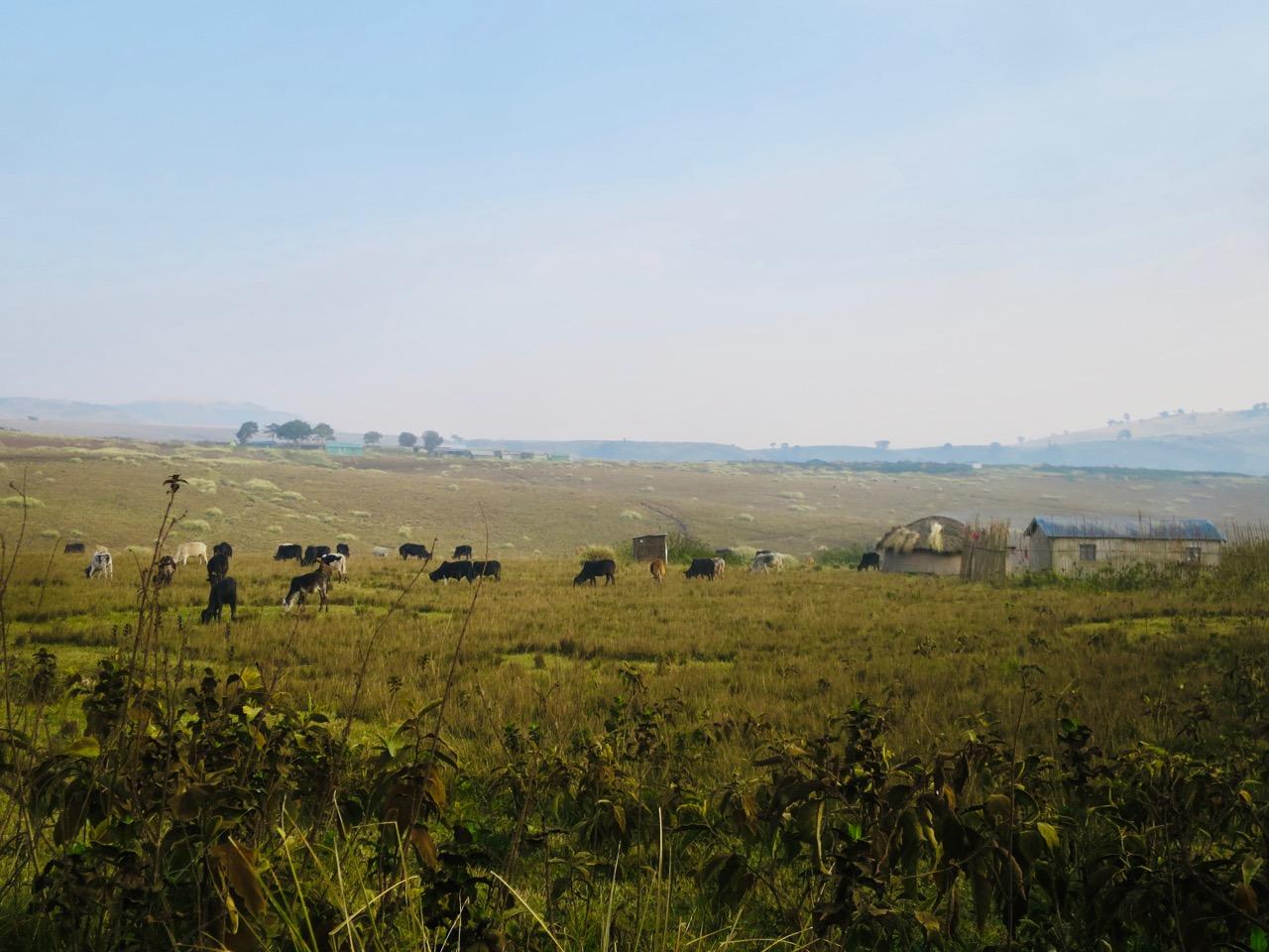 Ngorongoro 1 10