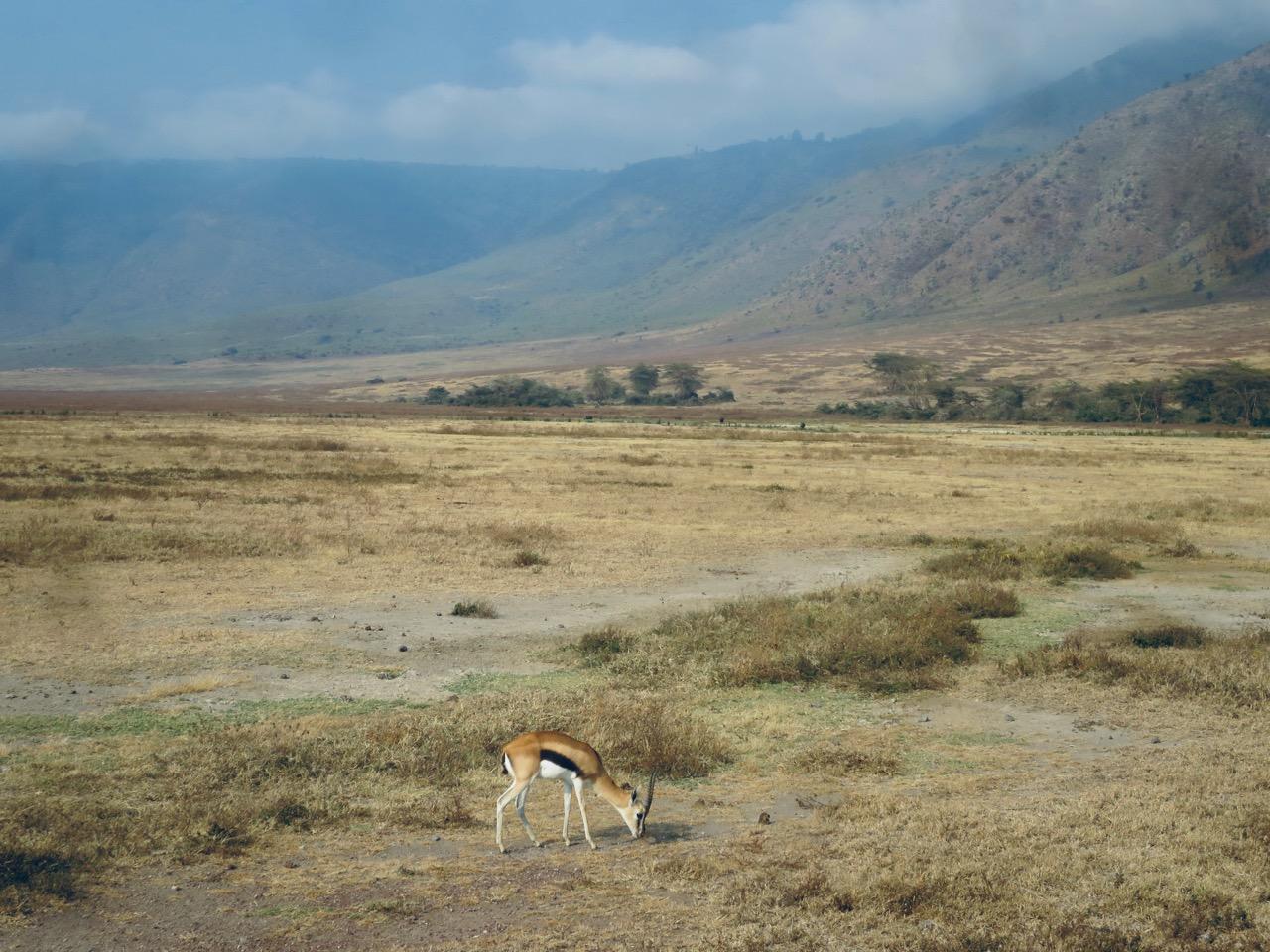Ngorongoro 1 16