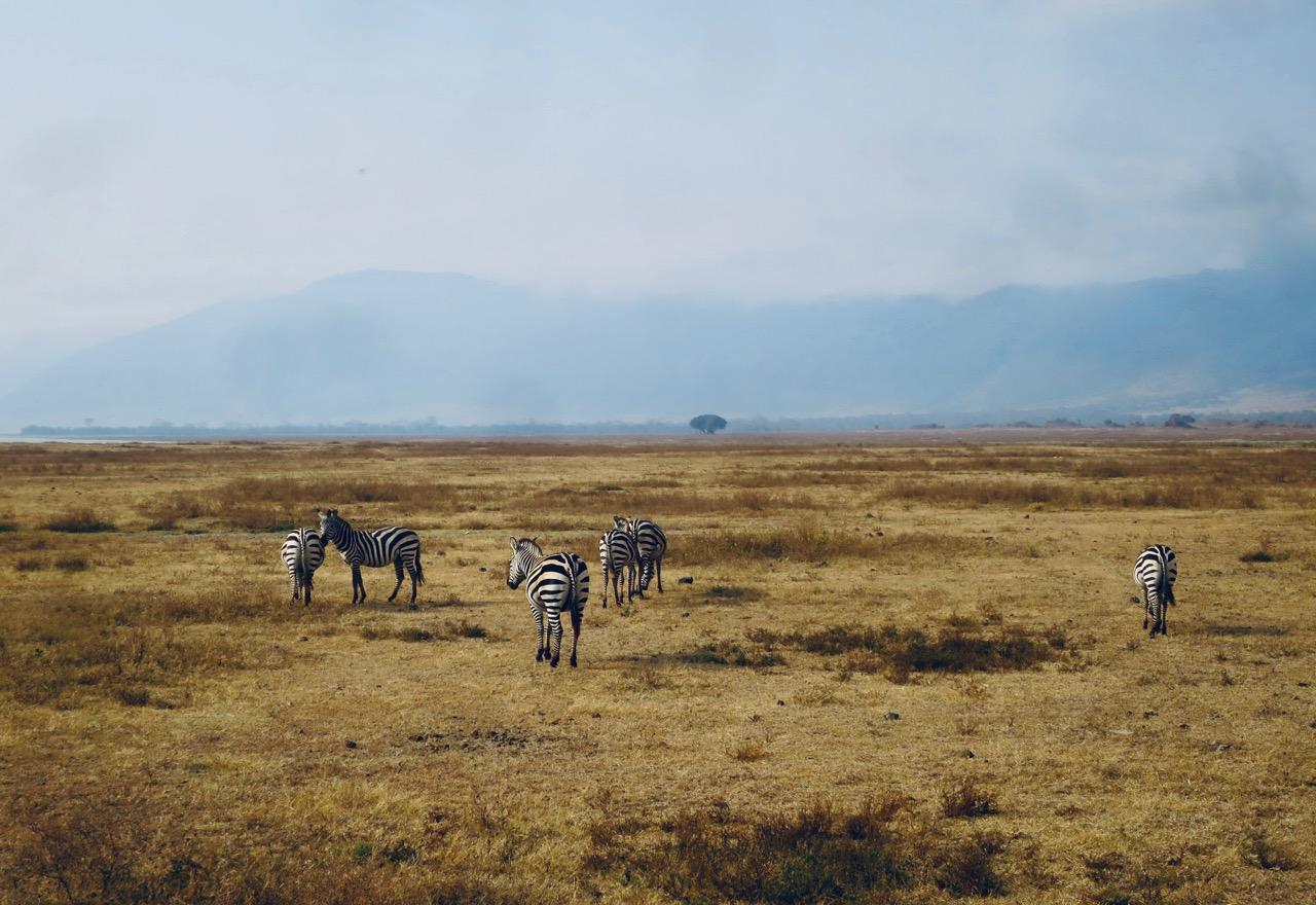 Ngorongoro 1 17