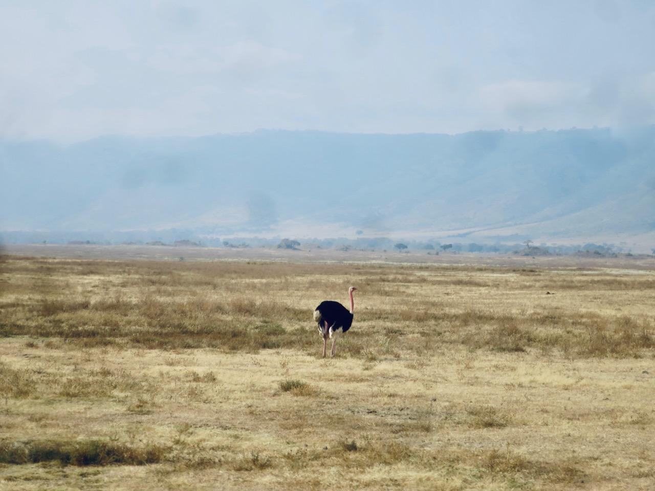 Ngorongoro 1 18