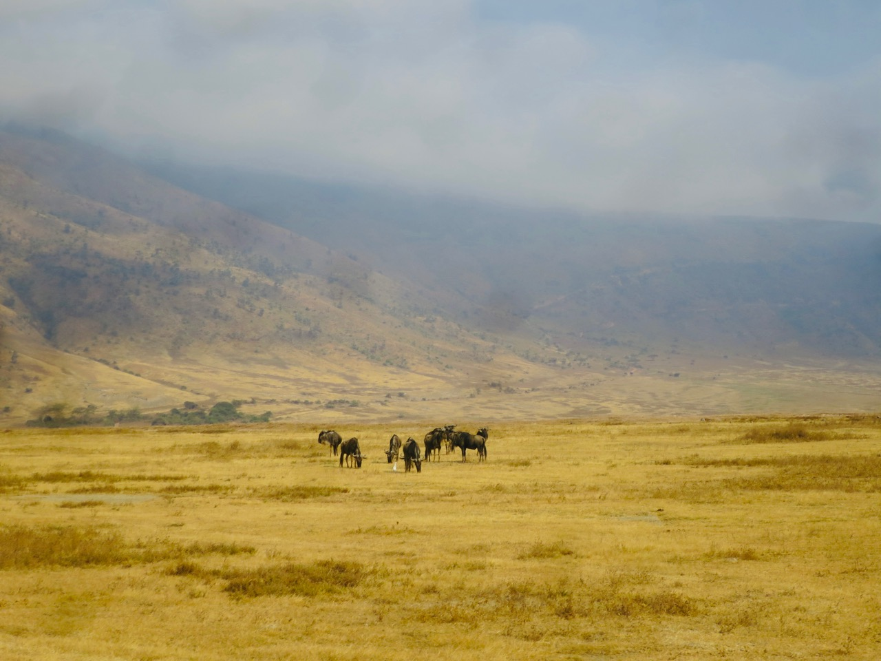 Ngorongoro 1 19