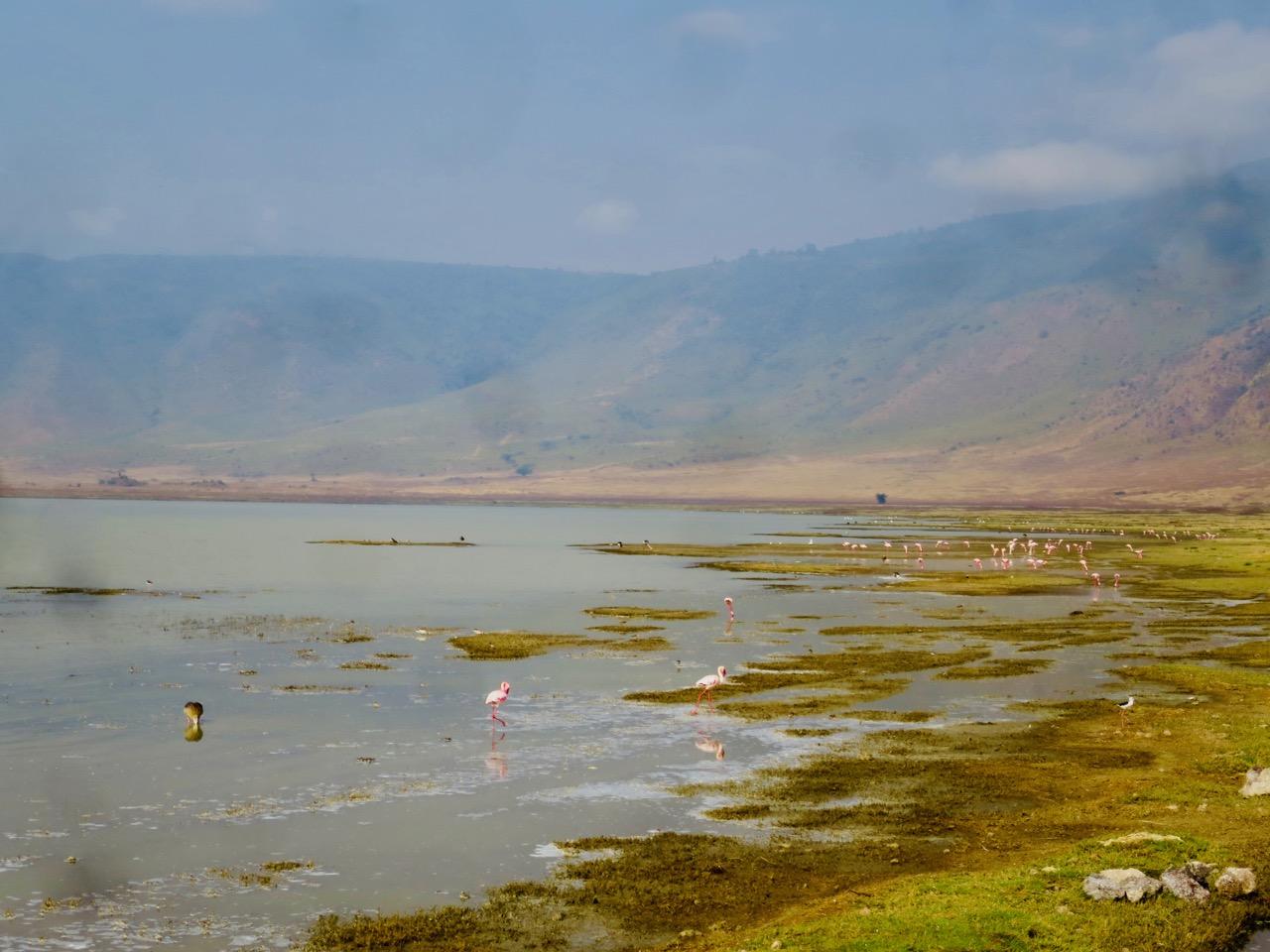 Ngorongoro 1 20