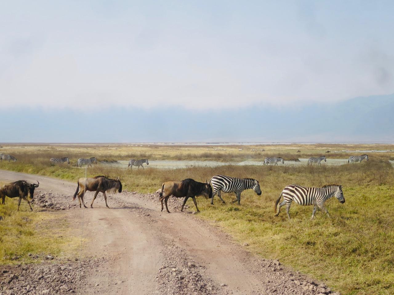 Ngorongoro 1 21