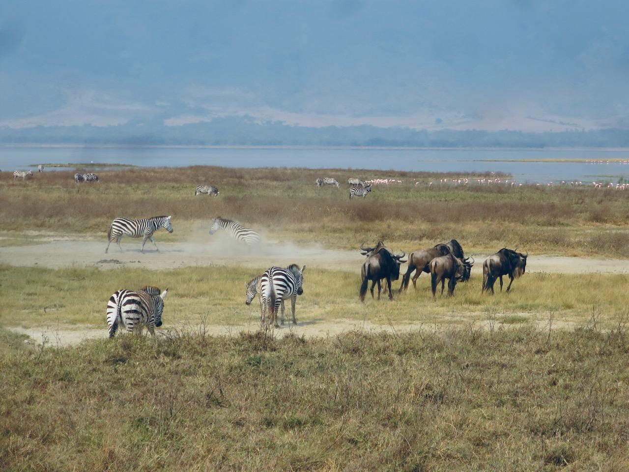 Ngorongoro 1 22