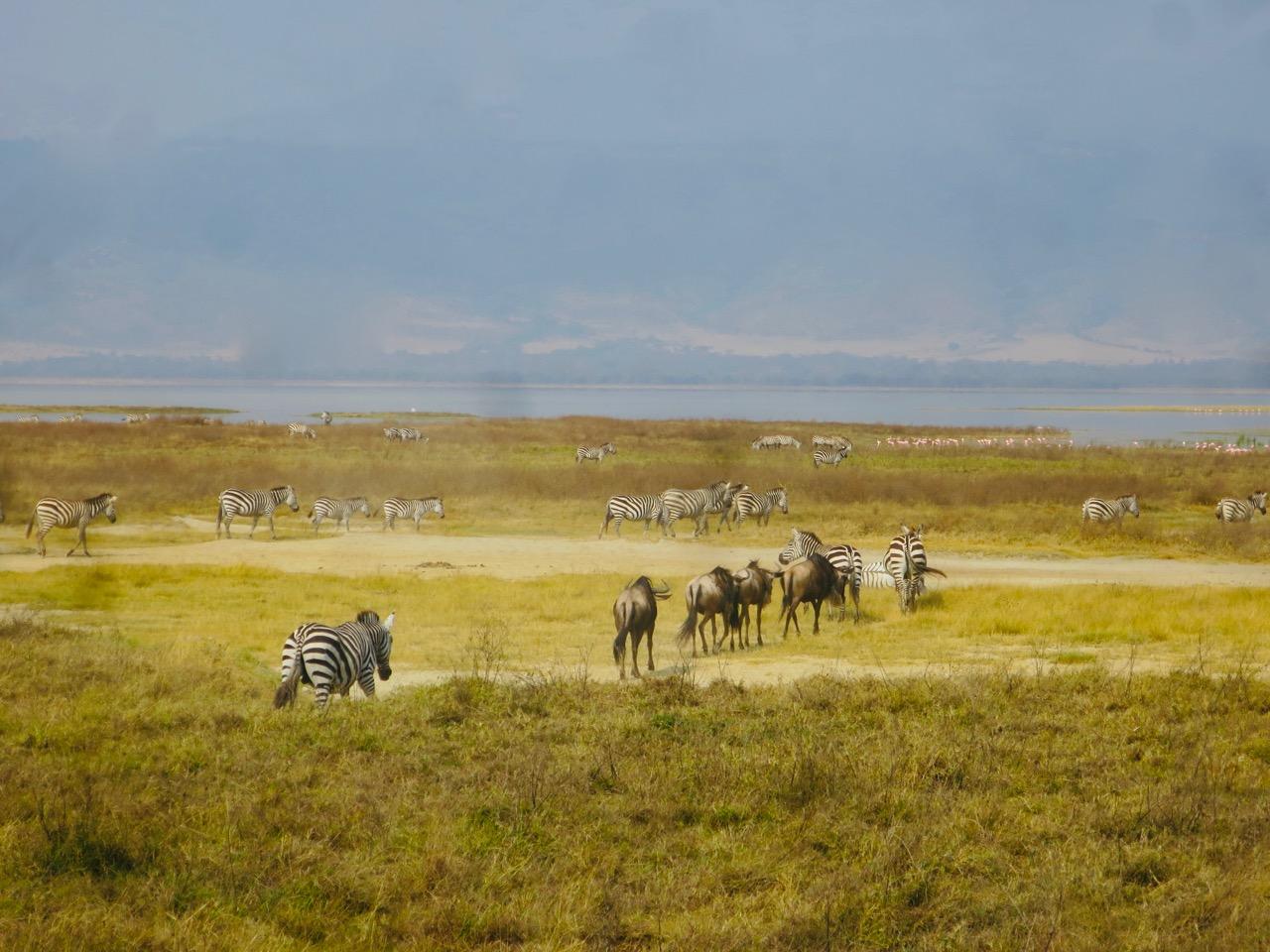 Ngorongoro 1 23