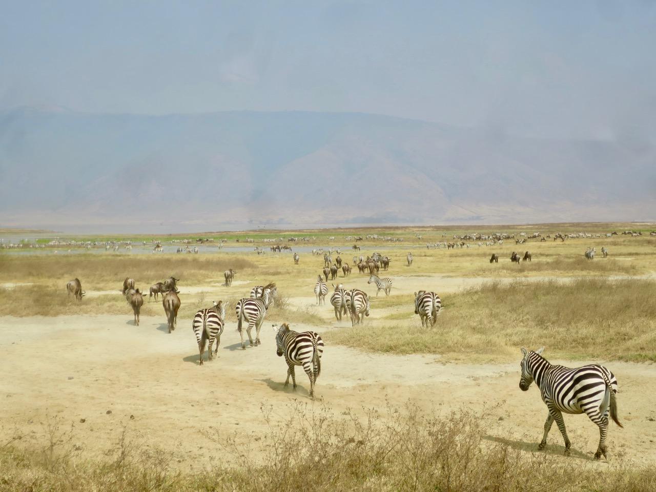 Ngorongoro 1 24