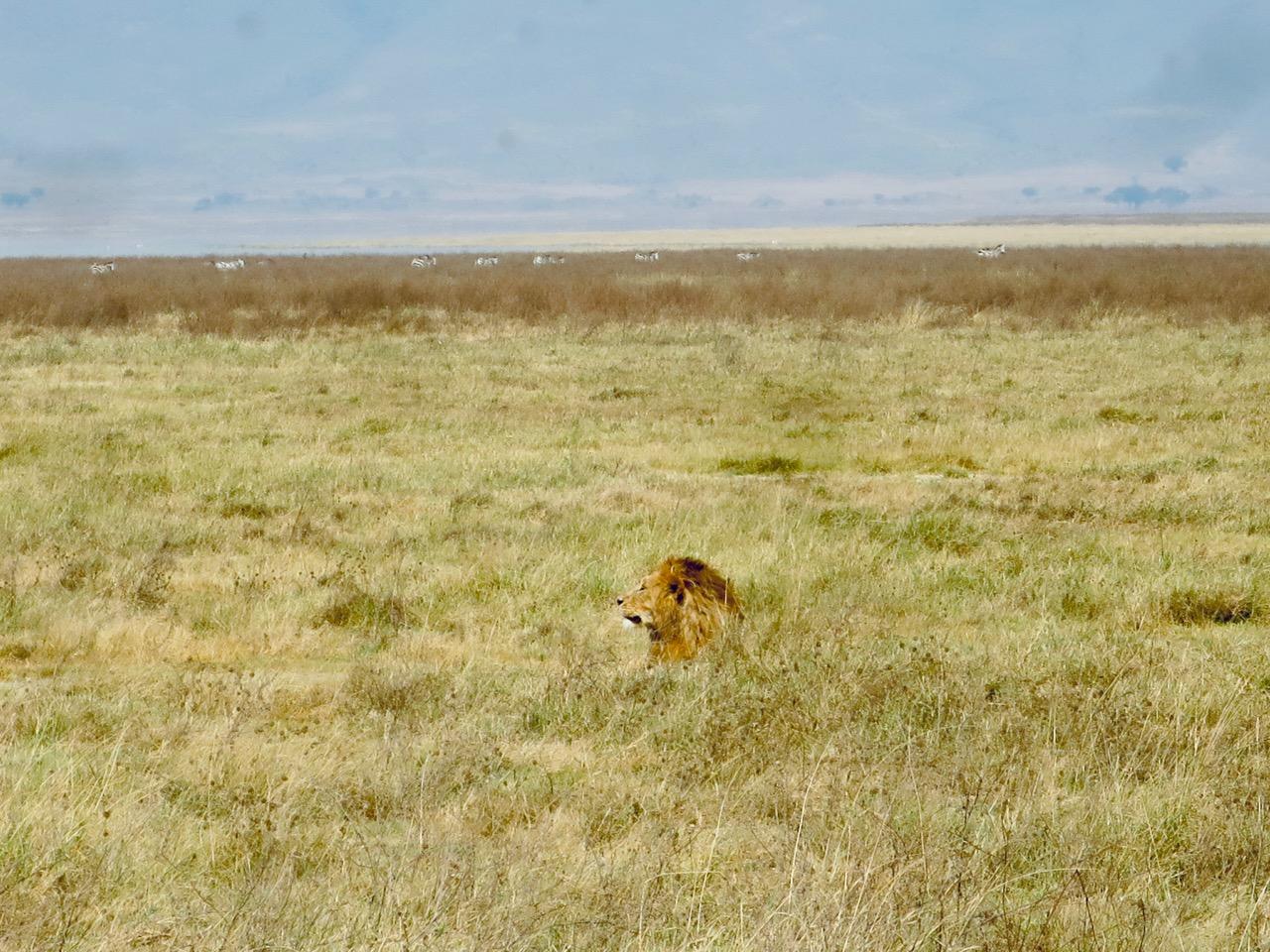 Ngorongoro 1 25