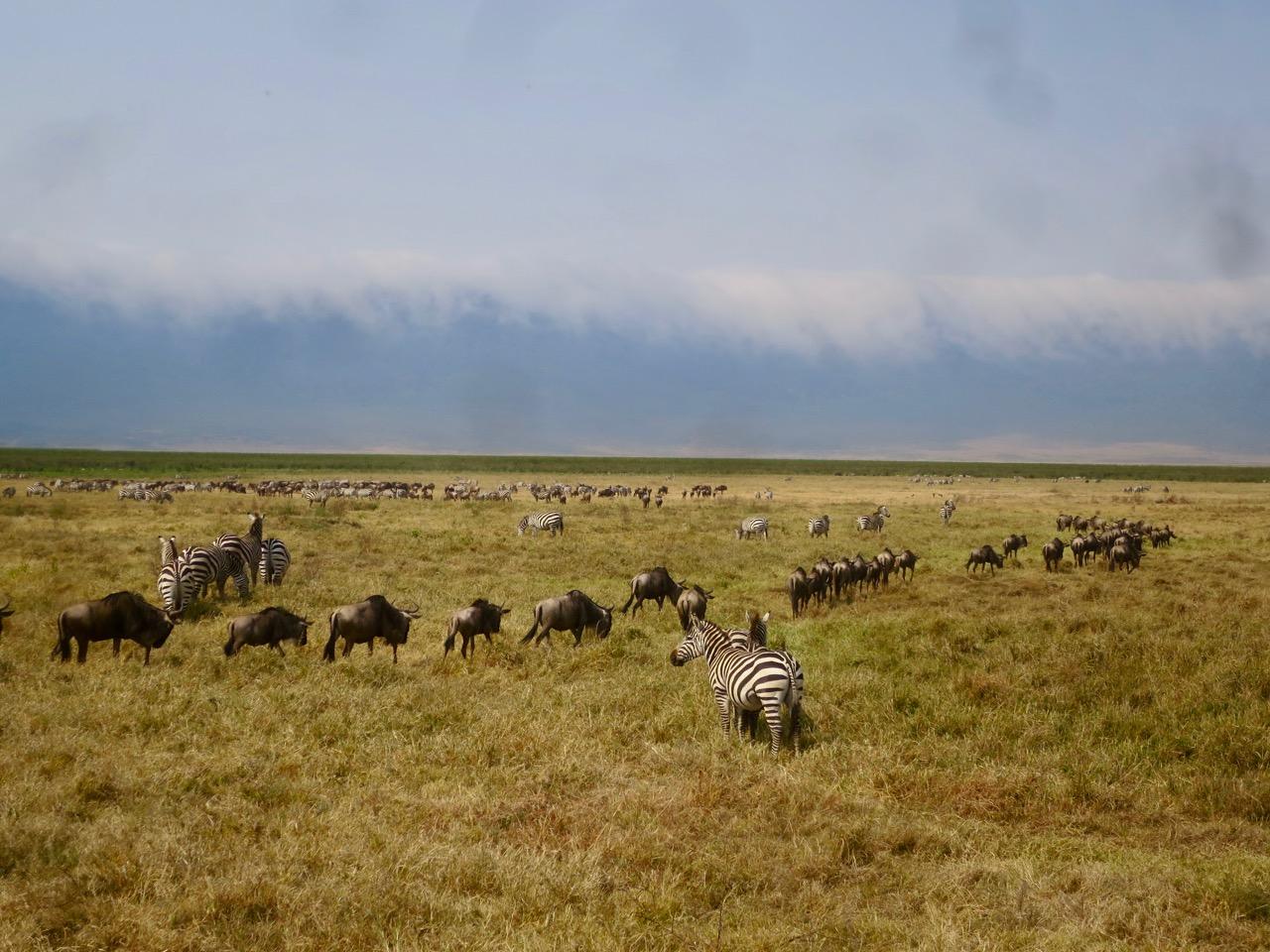 Ngorongoro 1 26