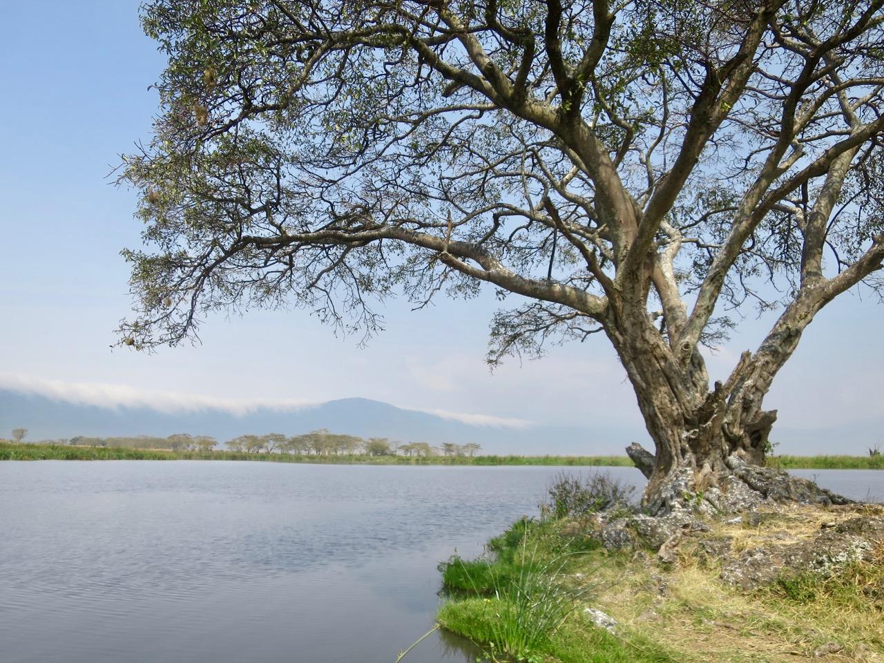 Ngorongoro 1 31