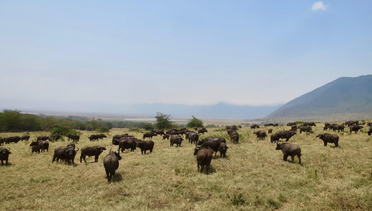 Ngorongoro 1 32